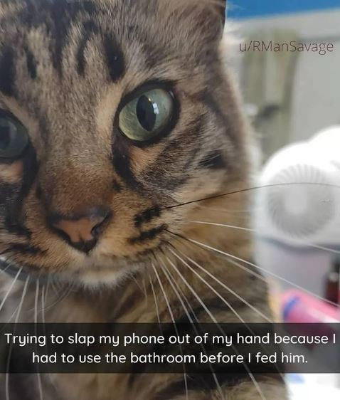 Cat - u/RManSavage Trying to slap my phone out of my hand because I had to use the bathroom before I fed him.