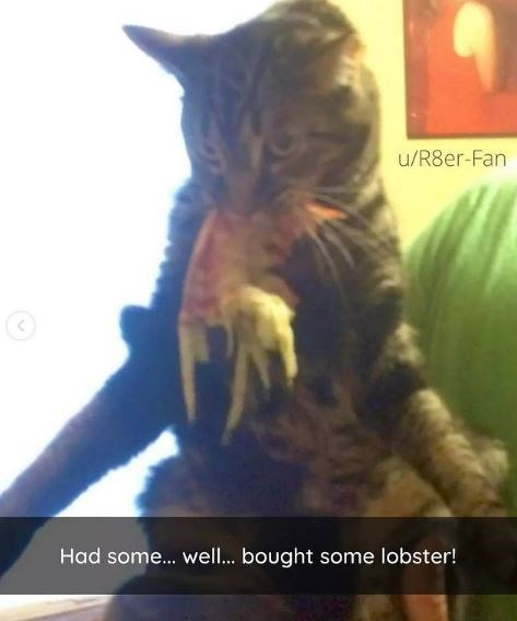Cat - u/R8er-Fan Had some.. well.. bought some lobster!
