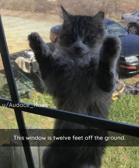 Window - U/Audace_Noire This window is twelve feet off the ground.
