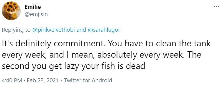 Font - Emilie ... @emjisin Replying to @pinkvelvethobi and @sarahlugor It's definitely commitment. You have to clean the tank every week, and I mean, absolutely every week. The second you get lazy your fish is dead 4:40 PM · Feb 23, 2021 · Twitter for Android