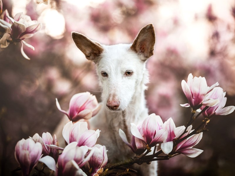 dogs photography winners 2019