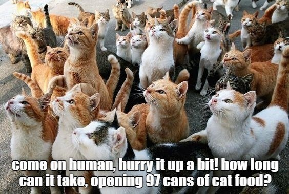 Photograph - come on human, hurry it up a bit! how long can it take, opening 97 cans of cat food?