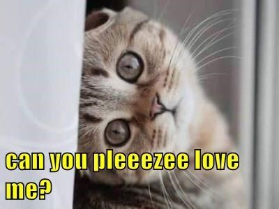Cat - can you pleeezee love me?