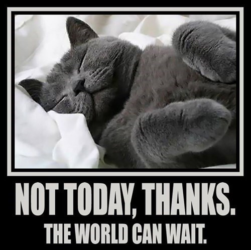 Cat - NOT TODAY, THANKS. THE WORLD CAN WAIT.
