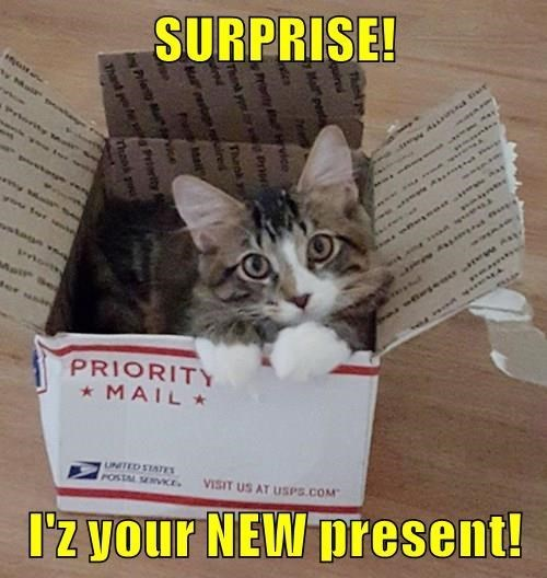 Cat - SURPRISE! Mair p Prtority A a tiur you 1301110 A ine e Mair Aer unin PRIORITY * MAIL * UNITED STATES POSTM MVKE. VISIT US AT USPS.COM I'z your NEW present! Thnke quired Mai pesta ten rnty MEwvice Thenk you rw Pro Thank yp Ma ret raired Pao Mart ngPrieity Mal ice te Priarity Th Thank p
