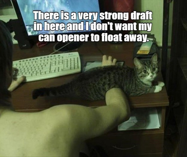 Cat - There is a very strong draft in here and I don't want my can opener to float away.