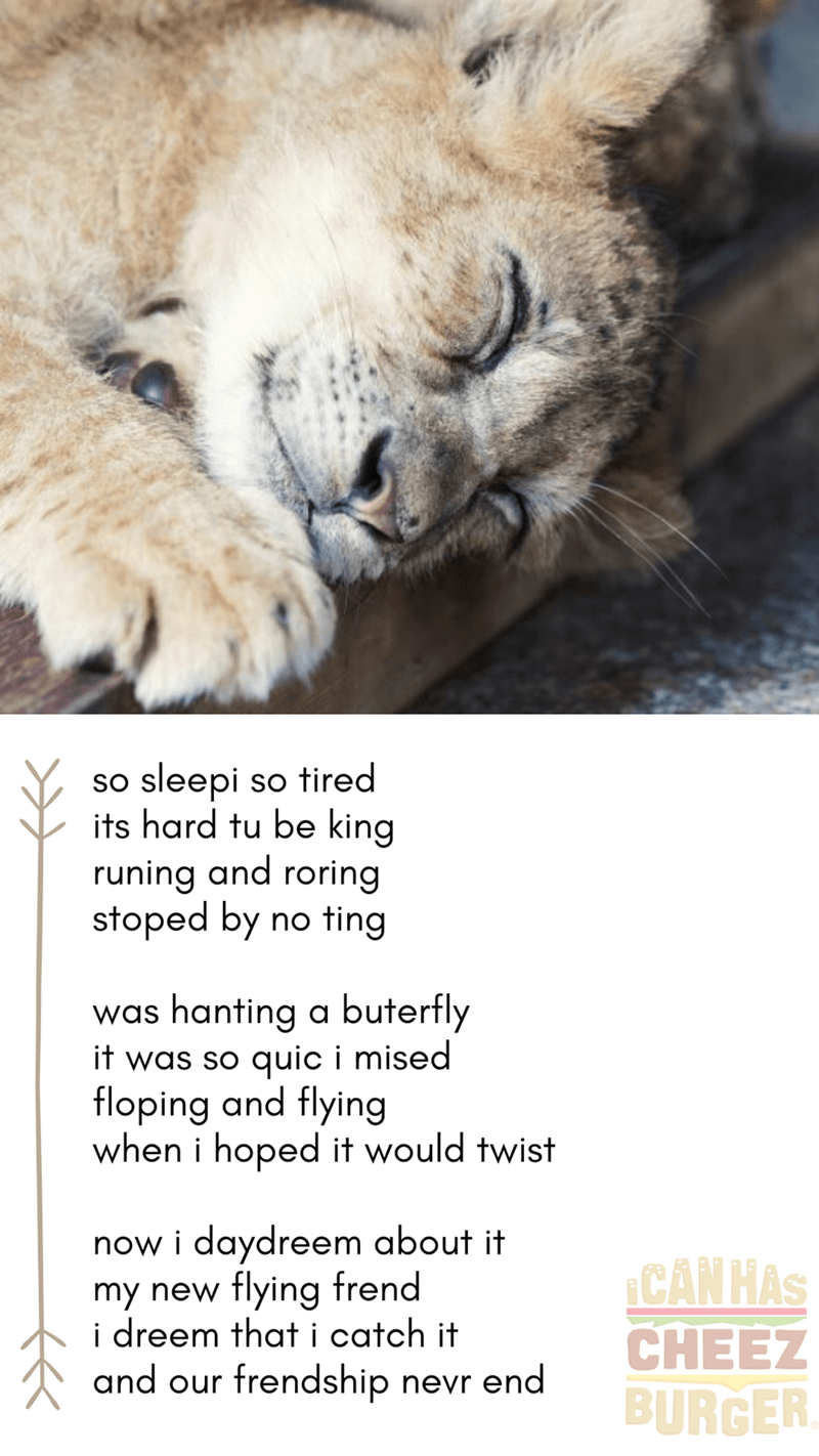 so sleepy so tired its hard to be king running and roaring stopped by no ting was hunting a butterfly it was so quick i missed flopping and flying when i hoped it would twist now i daydream about it my new flying friend i dream that i catch it and our friendship never end | cute lion cub sleeping