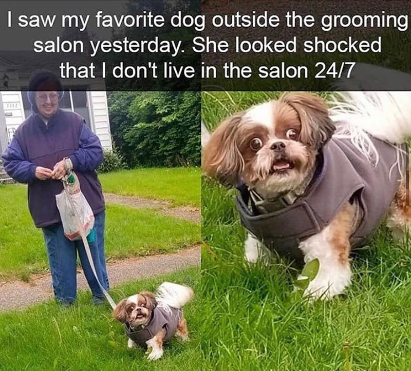 Dog - I saw my favorite dog outside the grooming salon yesterday. She looked shocked that I don't live in the salon 24/7 T92