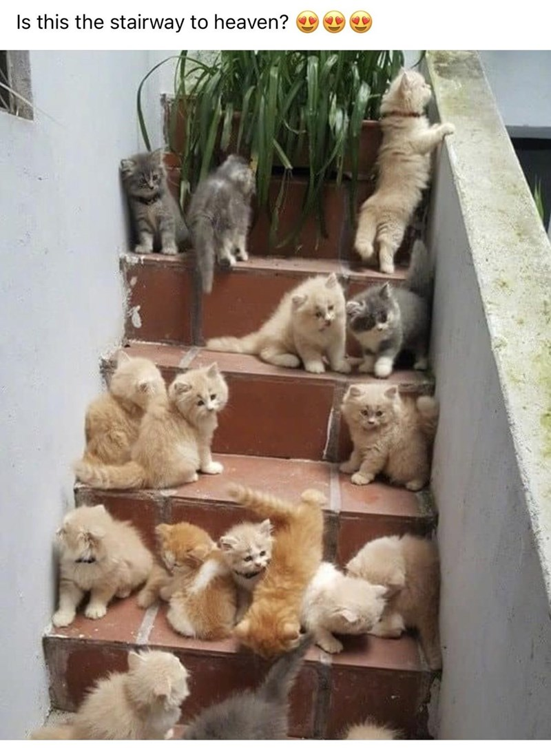 Vertebrate - Is this the stairway to heaven?