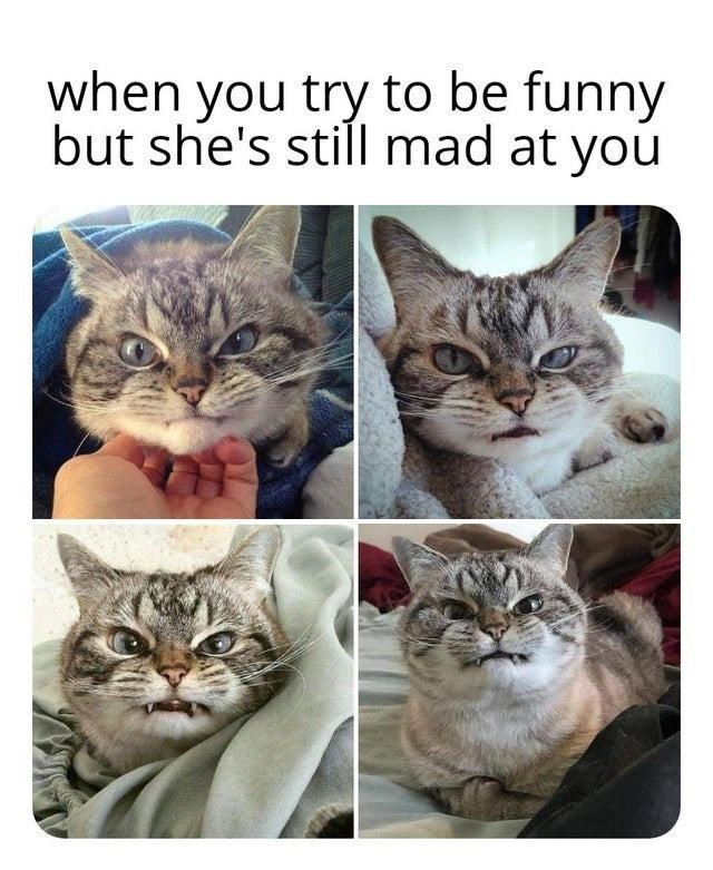 Cat - when you try to be funny but she's still mad at you