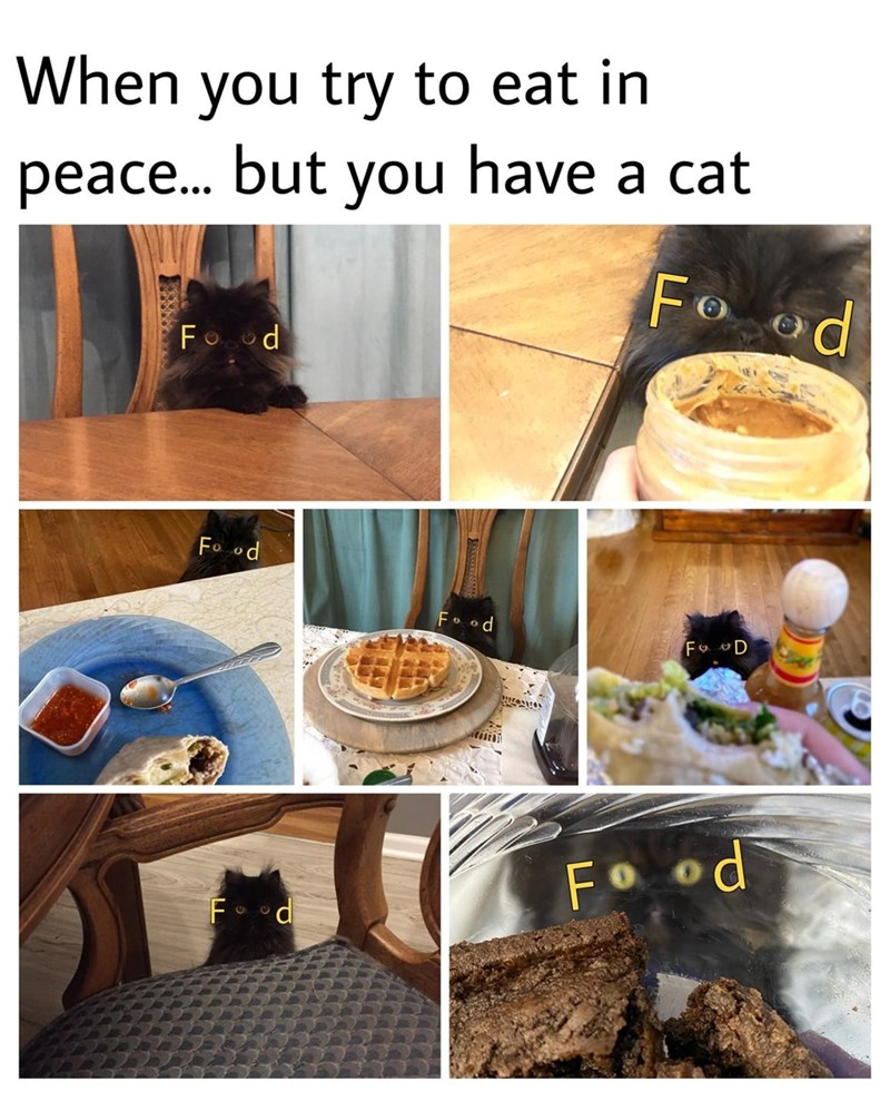 Food - When you try to eat in peace. but you have a cat Fo od Fo od Fo od Fo D Fo od Food