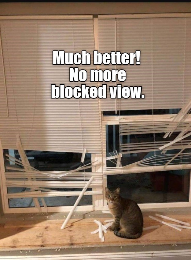 Much better! No more blocked view. | cat sitting in front of broken shutters