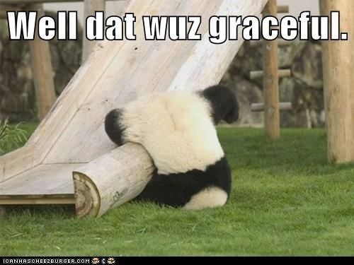 Well that was graceful.   funny pic of a panda bear falling from a slide