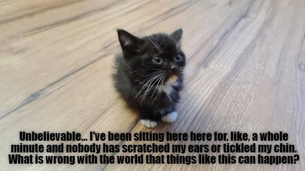 Unbelievable... I've been sitting here for, like, a whole minute and nobody has scratched my ears or tickled my chin. What is wrong with the world that things like this can happen? | tiny kitten