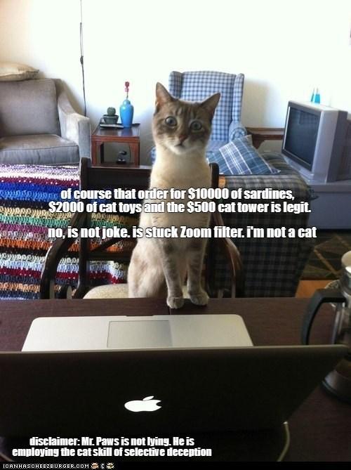 cat memes - 9594935040