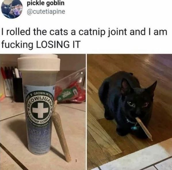 Cat - pickle goblin @cutetiapine I rolled the cats a catnip joint and I am fucking LOSING IT GROWN IN T COMPA elihe Fre UANA ACATN