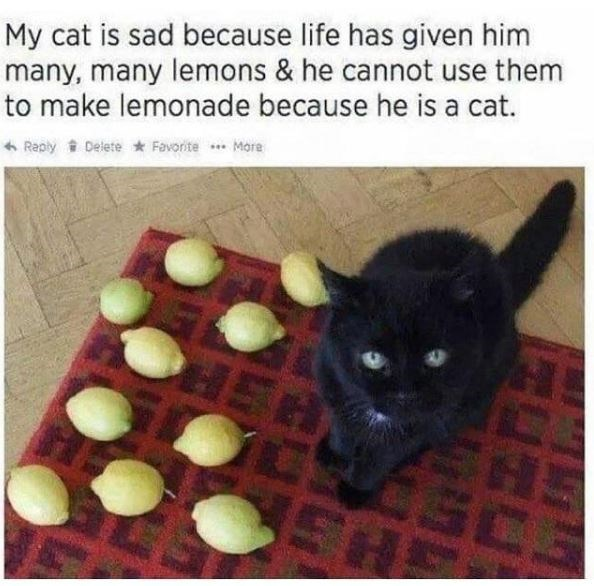 Cat - My cat is sad because life has given him many, many lemons & he cannot use them to make lemonade because he is a cat. * Rapiy i Delete * Favorite . More