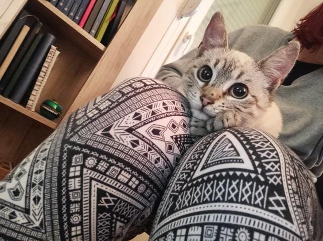 Cat - ERLAAAD MA 三三N