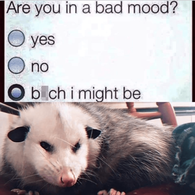 Font - Organism - Are you in a bad mood? yes O no O b ch i might be