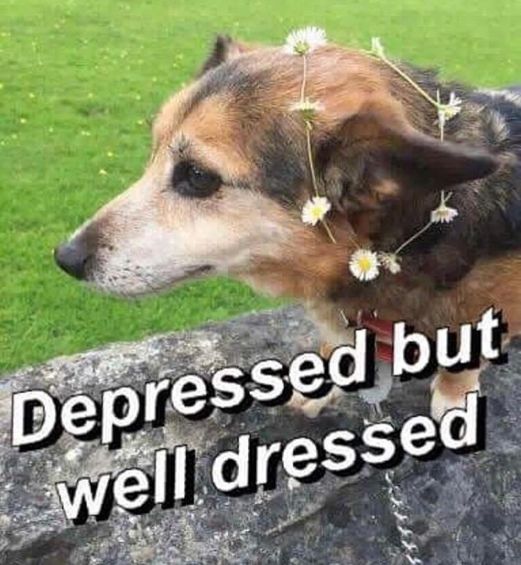 Dog - Depressed but well dressed
