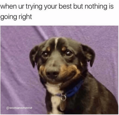 Dog - when ur trying your best but nothing is going right @womansmeme