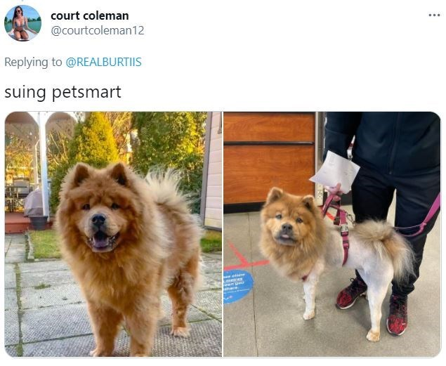 Dog - court coleman @courtcoleman12 ... Replying to @REALBURTIIS suing petsmart