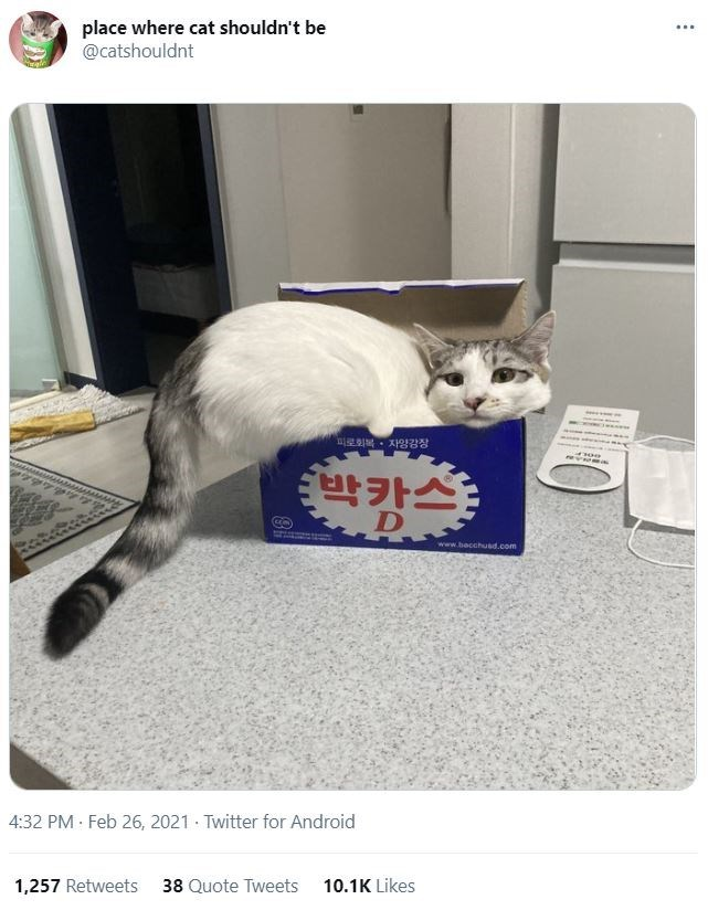 Cat - place where cat shouldn't be @catshouldnt ... 피로회복 . 자양강장 박캉스: www.bacchusd.com 4:32 PM · Feb 26, 2021 · Twitter for Android 1,257 Retweets 38 Quote Tweets 10.1K Likes