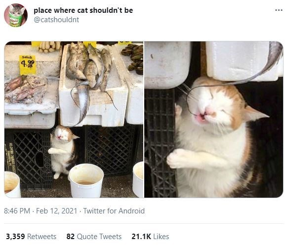 White - place where cat shouldn't be @catshouldnt ... Seuib 4. 8:46 PM · Feb 12, 2021 · Twitter for Android 3,359 Retweets 82 Quote Tweets 21.1K Likes
