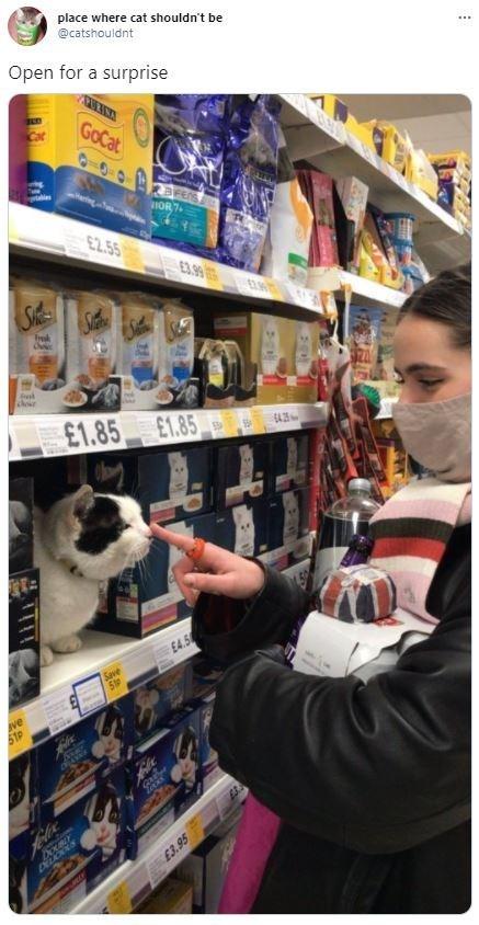 Dog - place where cat shouldn't be @catshouldnt Open for a surprise GoCat 10T01 1IOR7 £2.5 E3.99 £1.85 E1.85 £4.5 Save 519 ve 51P DELIGOS £3.95