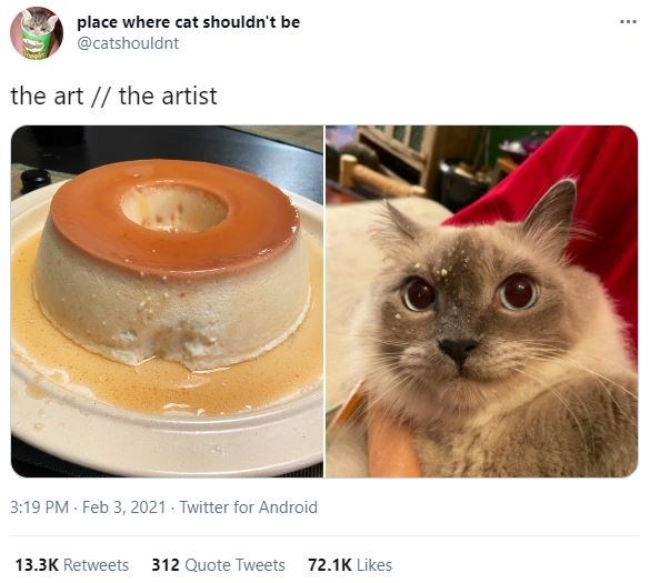 Cat - place where cat shouldn't be @catshouldnt the art // the artist 3:19 PM - Feb 3, 2021 Twitter for Android 13.3K Retweets 312 Quote Tweets 72.1K Likes