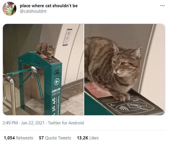Cat - place where cat shouldn't be @catshouldnt 2:49 PM Jan 22, 2021 · Twitter for Android 1,054 Retweets 57 Quote Tweets 13.2K Likes 97 9E4