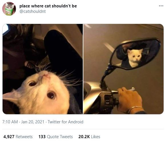 Photograph - place where cat shouldn't be @catshouldnt 7:10 AM - Jan 20, 2021 - Twitter for Android 4,927 Retweets 133 Quote Tweets 20.2K Likes