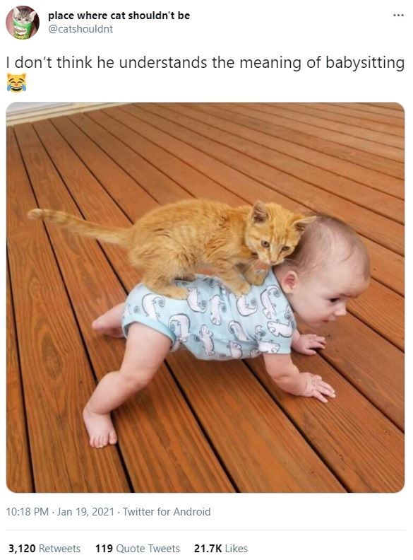 Vertebrate - place where cat shouldn't be @catshouldnt I don't think he understands the meaning of babysitting 10:18 PM Jan 19, 2021 - Twitter for Android 3,120 Retweets 119 Quote Tweets 21.7K Likes