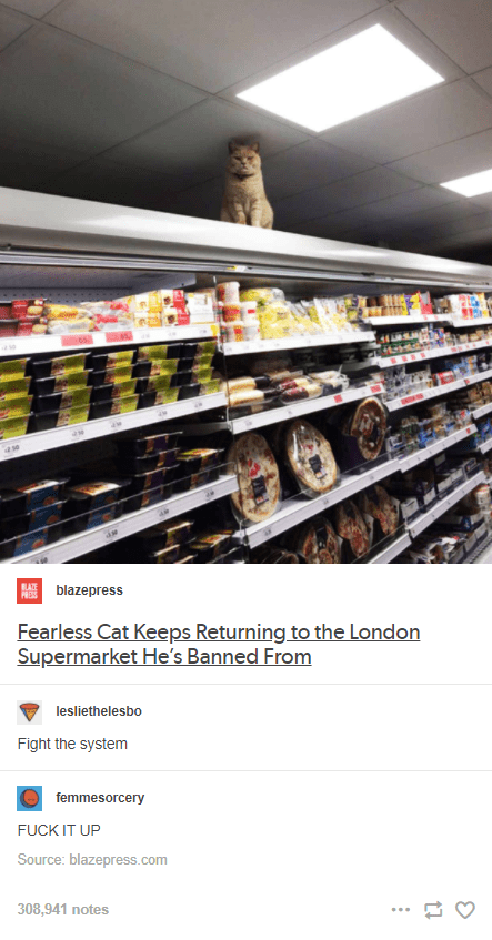 Food - blazepress Fearless Cat Keeps Returning to the London Supermarket He's Banned From lesliethelesbo Fight the system femmesorcery FUCK IT UP Source: blazepress.com 308,941 notes ...