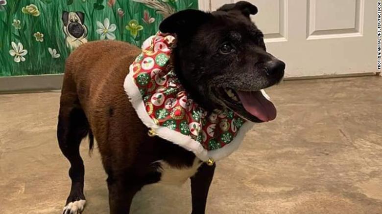 Dog - FROM SA ANIMAL SHELTER/FACEBOOK
