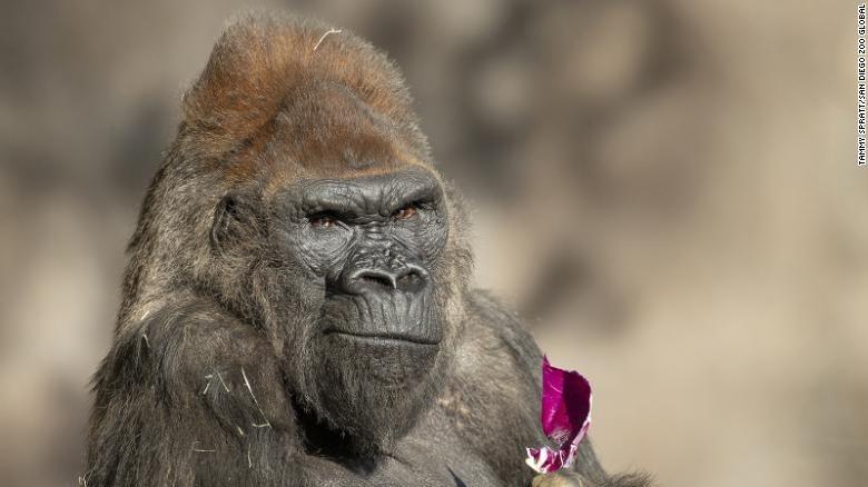 Primate - TAMMY SPRATT/SAN DIEGO 200 GLOBAL