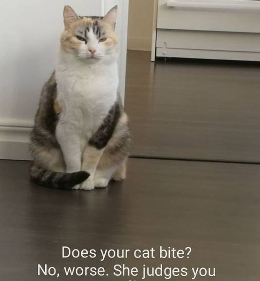 Cat - Does your cat bite? No, worse. She judges you