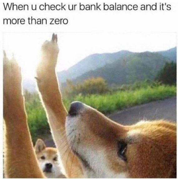Dog - When u check ur bank balance and it's more than zero