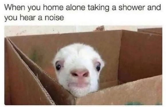 Photograph - When you home alone taking a shower and you hear a noise