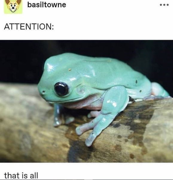 Frog - basiltowne ATTENTION: that is all