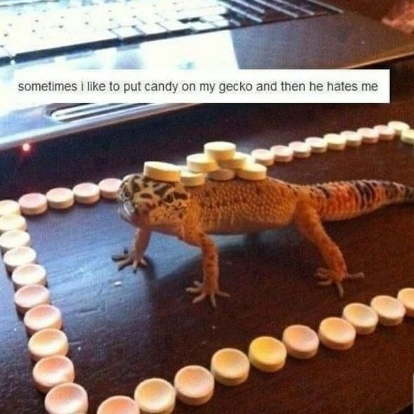 Wood - sometimes i like to put candy on my gecko and then he hates me