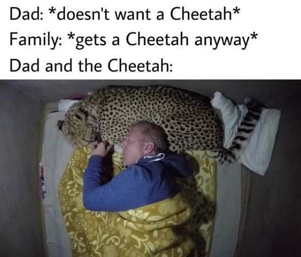 Product - Dad: *doesn't want a Cheetah* Family: *gets a Cheetah anyway* Dad and the Cheetah: