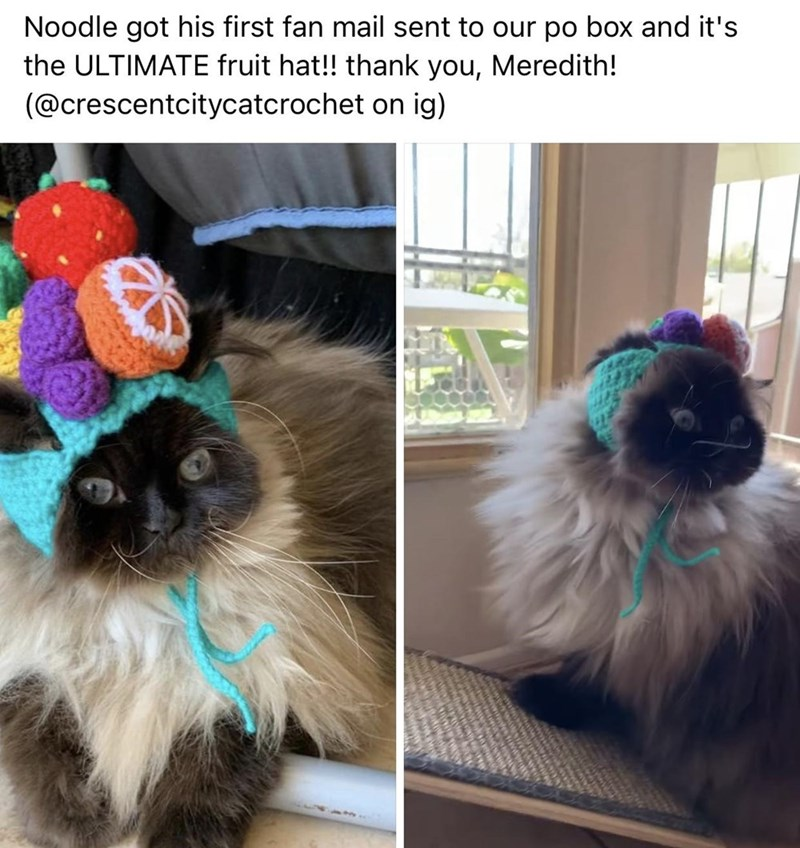 Cat - Noodle got his first fan mail sent to our po box and it's the ULTIMATE fruit hat!! thank you, Meredith! (@crescentcitycatcrochet on ig)