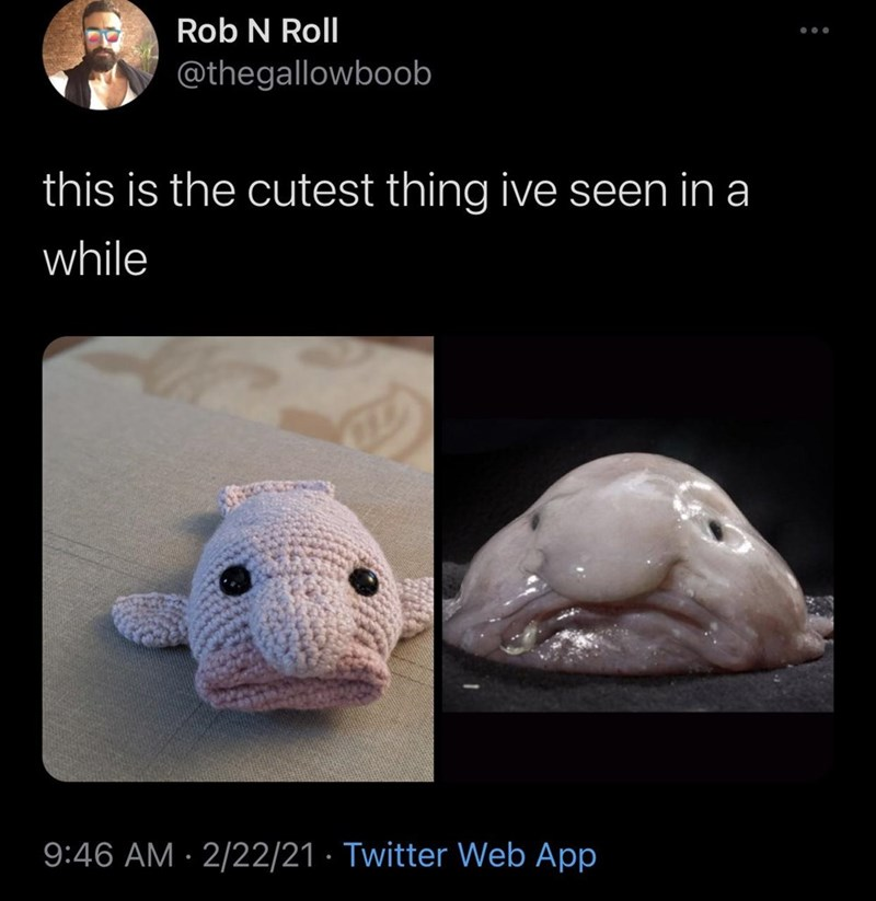 Vertebrate - Rob N Roll @thegallowboob this is the cutest thing ive seen in a while 9:46 AM · 2/22/21 · Twitter Web App