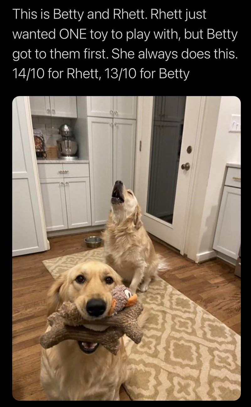 Dog - This is Betty and Rhett. Rhett just wanted ONE toy to play with, but Betty got to them first. She always does this. 14/10 for Rhett, 13/10 for Betty