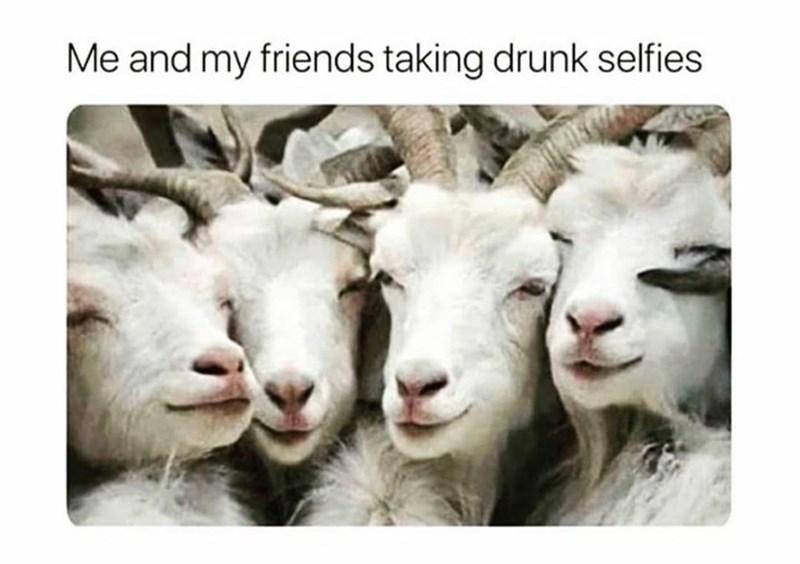Organism - Me and my friends taking drunk selfies