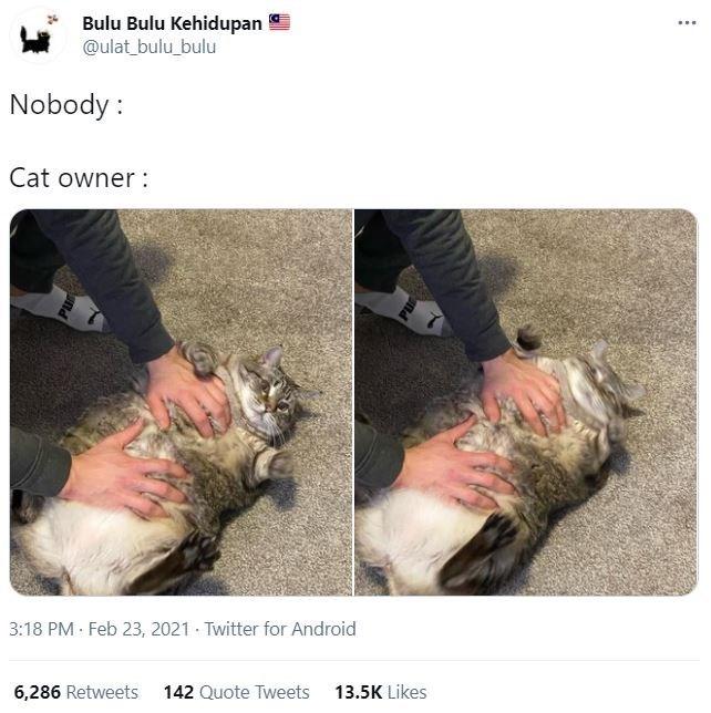 Hair - Bulu Bulu Kehidupan @ulat_bulu_bulu Nobody : Cat owner : 3:18 PM · Feb 23, 2021 · Twitter for Android 6,286 Retweets 142 Quote Tweets 13.5K Likes