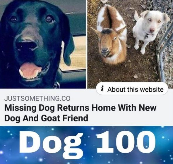 Dog - i About this website JUSTSOMETHING.CO Missing Dog Returns Home With New Dog And Goat Friend Dog 100