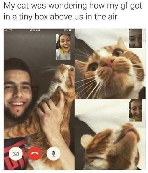 Nose - My cat was wondering how my gf got in a tiny box above us in the air LTE 644 PM
