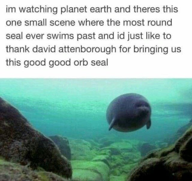 Water - im watching planet earth and theres this one small scene where the most round seal ever swims past and id just like to thank david attenborough for bringing us this good good orb seal
